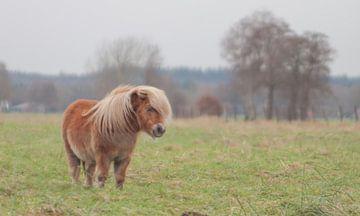 Litle pony van w grob