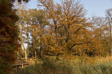 water met bos in herfstkleuren in de veluwe