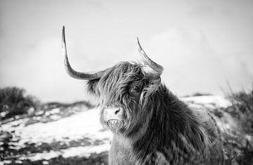 Schottischer Highlander von Claire Groeneveld