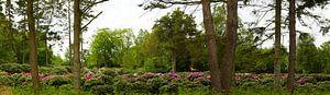 Rhododendron-Gärtnerei von Wieland Teixeira