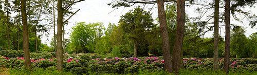 Pépinière de rhododendrons