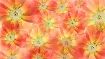 mehrere Blumen von Klaartje Majoor