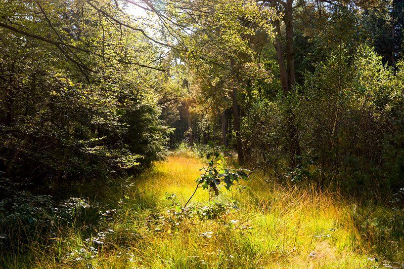 Into the woods van Jaco Verheul