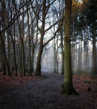 Nebel zwischen den Bäumen in Annas Hoeve von Pascal Raymond Dorland