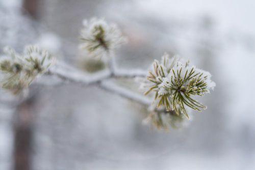close up van een boom onder de sneeuw.