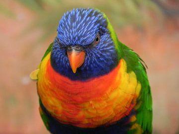 Vogel Lori papegaai van de blauwe bergen van Ingrid Van Maurik