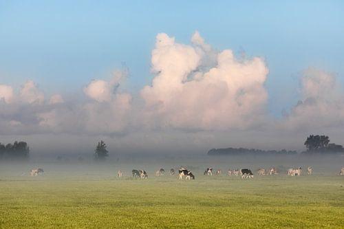 Hollands nevelig landschap te IJlst met grazende koeien en een typisch nederlandse wolkenlucht. Wout van