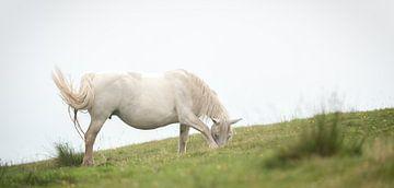 Het witte paard sur Wim Slootweg
