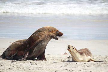 Australische zeeleeuwen van Dirk Rüter