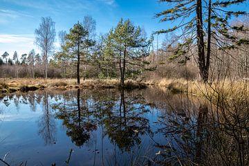 Spiegelung im Birkensee im Naturpark Schönbuch von Alexander Wolff