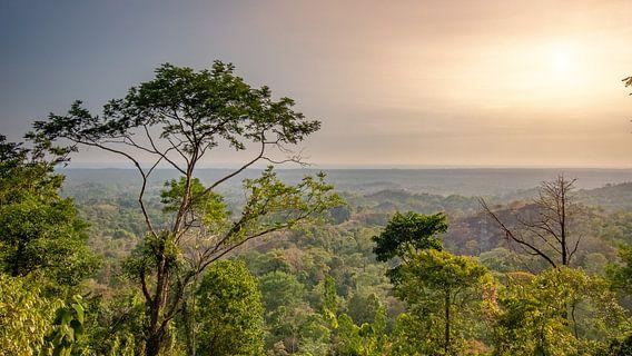 De jungle in Costa Rica met op de achtergrond de Stille oceaan.