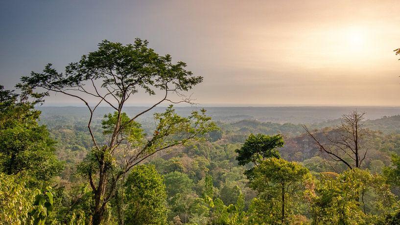 De jungle in Costa Rica met op de achtergrond de Stille oceaan. van Remco Piet
