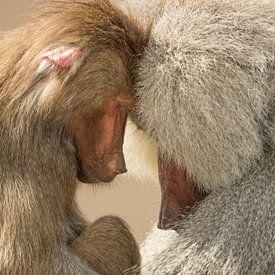 Rust in apen land van Ben Bokeh