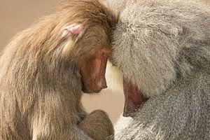 Rust in apen land van