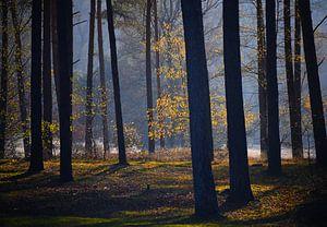 Mystiek  bos van Artelier Gerdah