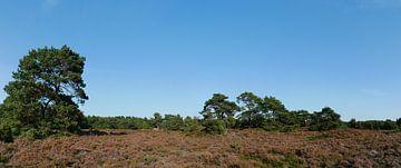 Heideland mit Waldkiefern von Wim vd Neut