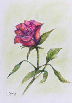 Roze roos. van