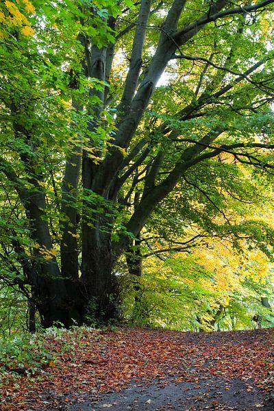 Herbstbaum sur Ostsee Bilder