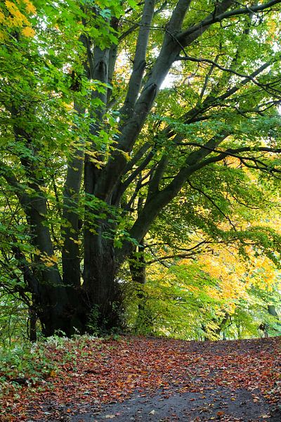 Herbstbaum von Ostsee Bilder