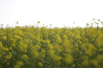Gelbe Blumen von Janine Bekker Photography