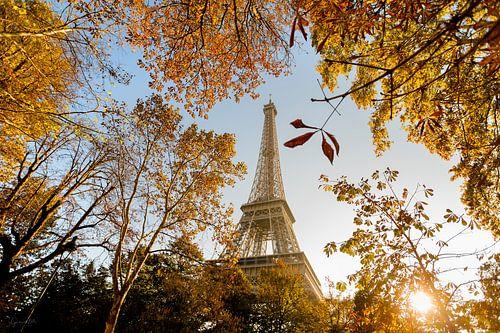 Fall in Paris van