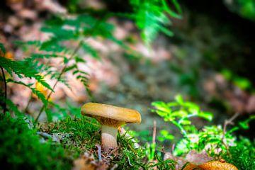 Mushroom von Tomas S.