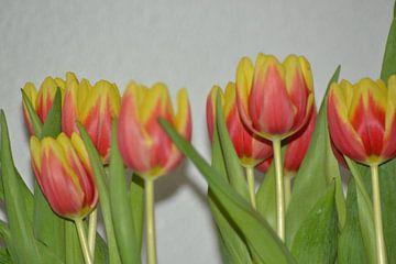 geel met rode tulpen tegen een witte achtergrond von tiny brok