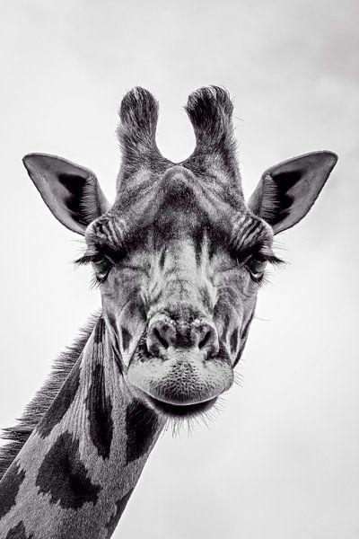 Giraffe van Richard Guijt