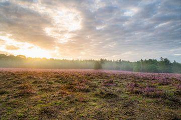 Heide in bloei van Alvin Aarnoutse