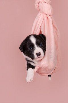 New born Puppy