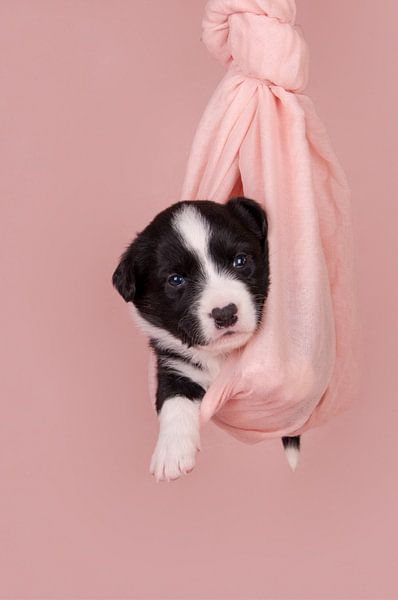 New born Puppy van Kirsten Geerts