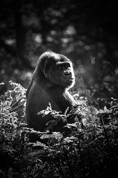 Gorilla im Gebüsch von Tanya Gorree