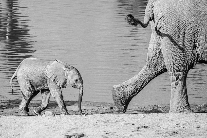 Op de voet volgen - olifanten van Sharing Wildlife