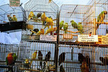 Vogelmarkt von R. de Jong