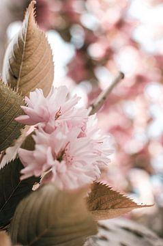 Tak met roze bloesem en blaadjes van Dennis  Georgiev