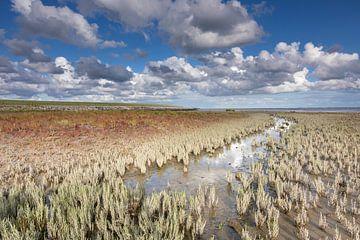 Zeekraal in Waddenzee - Natuurlijk Ameland van Anja Brouwer Fotografie
