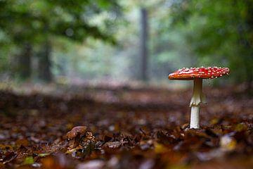 Herfst in de Nederlandse bossen van Eric Wander