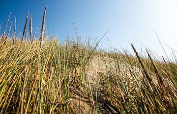 Strand Gräser Sand Düne van Alexander Forstreuter