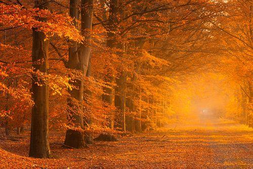 Herfst in volle kleuren in het bos met een mistige sfeer