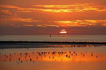 Zonsondergang wad met vogels van Anja Brouwer Fotografie