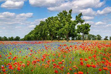 Mohnblumenfeld mit Kornblumen und einer Allee von Melanie Viola