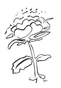 FlowerTalk 2 van