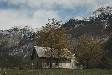 Kaasboerderij van Paulien van der Werf