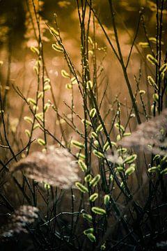 Katjes en pluimen in het zonlicht von Petra Brouwer