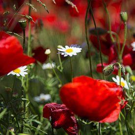 Bloemen   Klaprozen Griekenland 2 van Servan Ott
