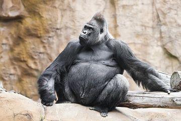 Een krachtige dominante mannelijke gorilla van Michael Semenov