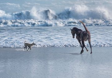Courses de chevaux et de chiens en mer  sur Marcel van Balken