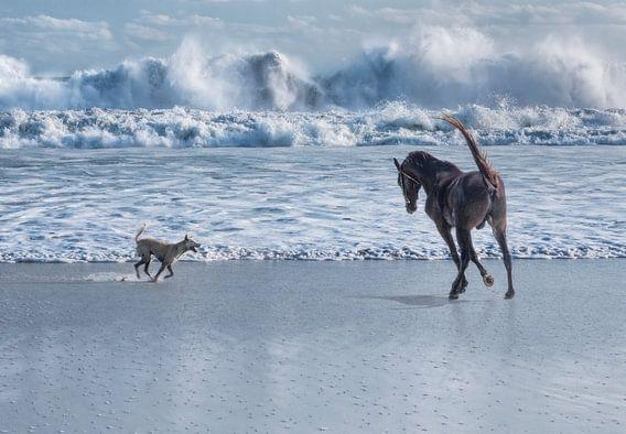 Paard en hond rennend bij zee