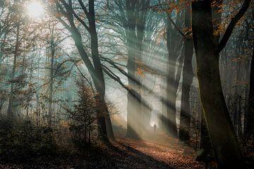 Sonnenschein durch die Bäume von Jeroen Mondria