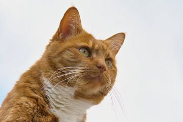 Rote Katze schaut in die Ferne. von JM de Jong-Jansen